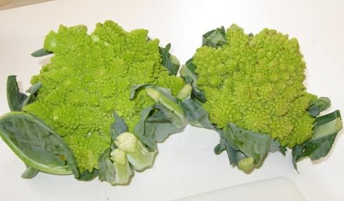 brocoflower